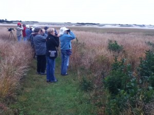 Group of YCAS birders scan the river mouth