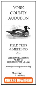 Download the York County Audubon 2012 Field Trips and Meetings brochure