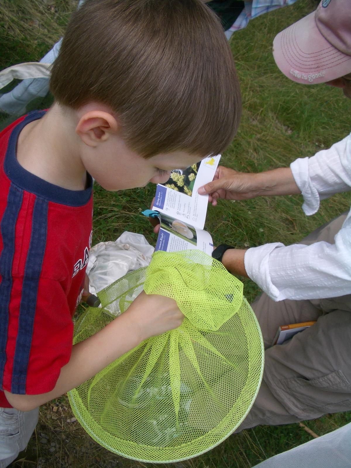 Small boy views an azure in a butterfly net
