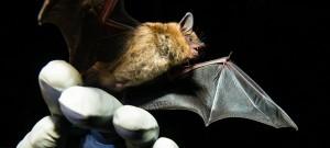 Bat BRI 2