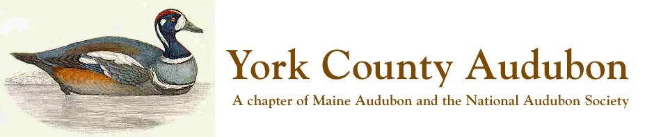 York County Audubon